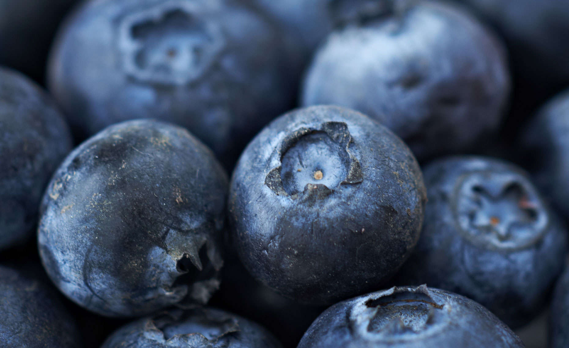 Blueberries, detail, close up